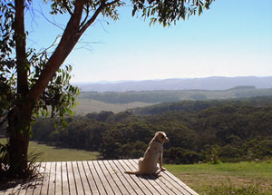 Dog friendly accommodation in Otways Accommodation - Great Ocean Road, Victoria